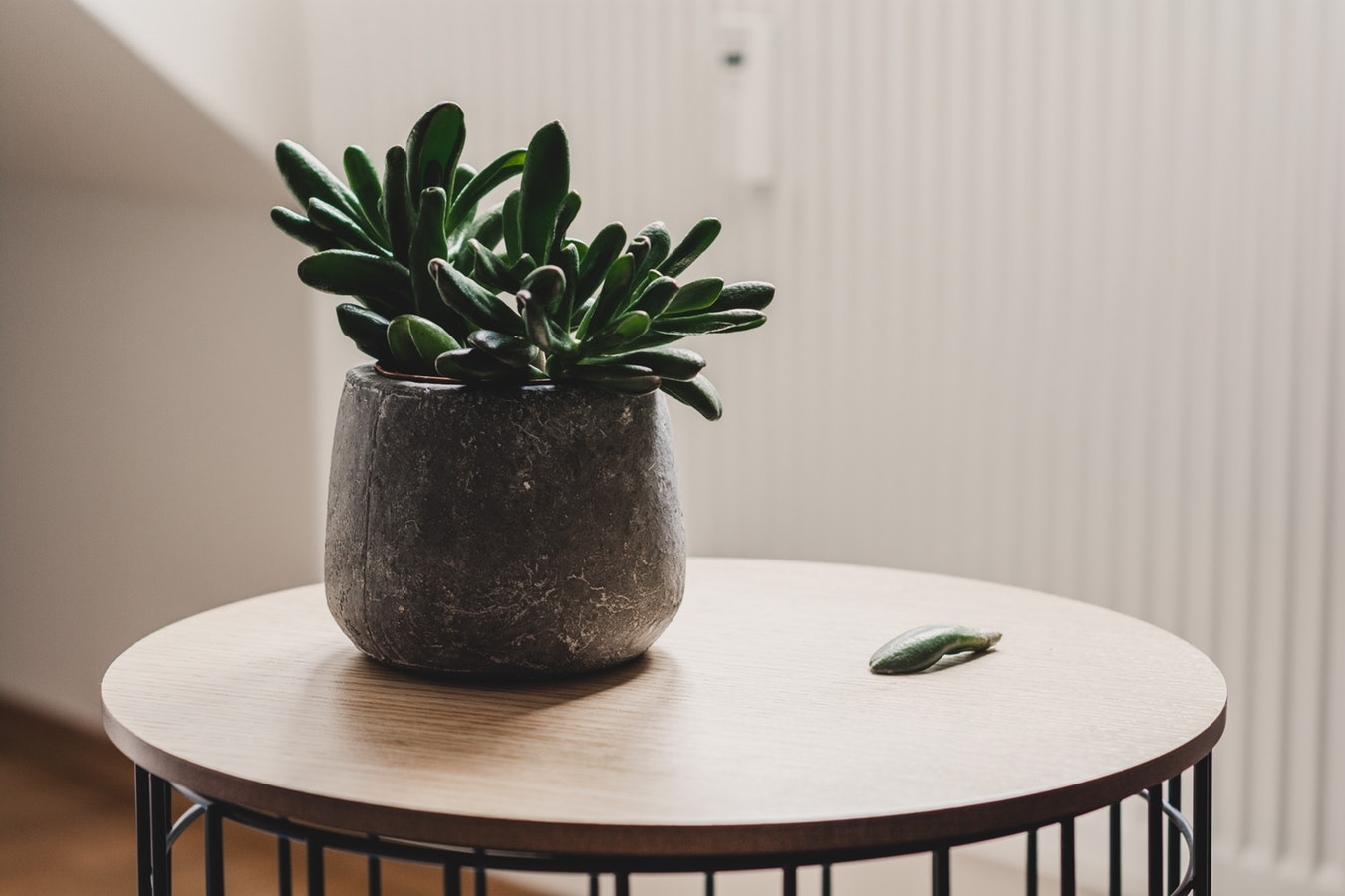 TOP 5 INDOOR PLANTS FOR LIMITED SPACE